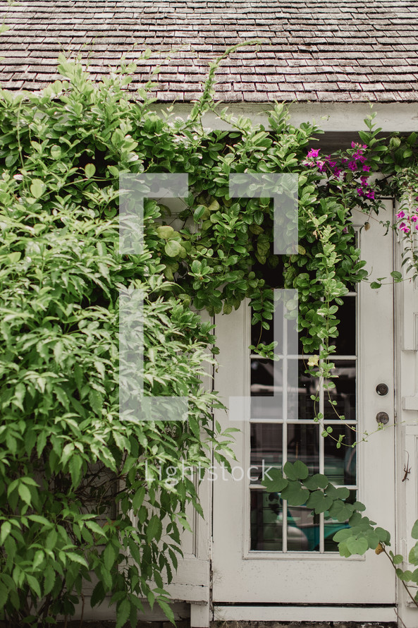 flowers on vines in front of a white door
