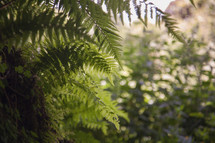 ferns in a forest