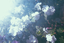 out of focus flowers abstract background