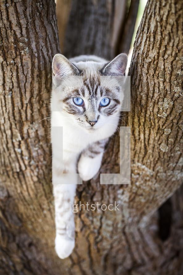 Cat in a tree.