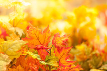 orange, olive, and gold fall leaves