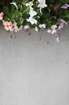 flowers along a sidewalk