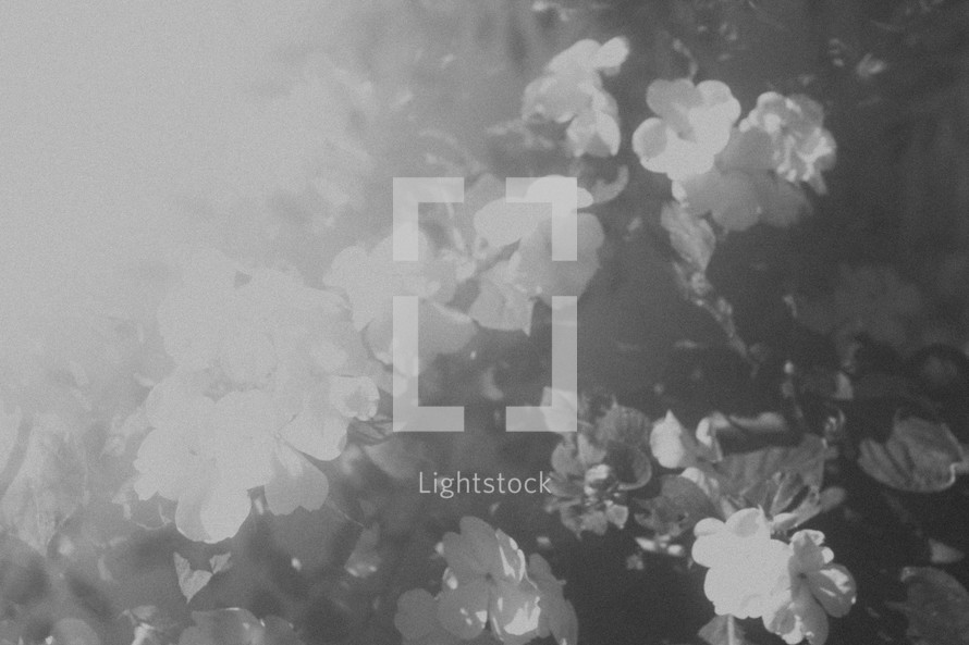 bright light over flowers in black and white