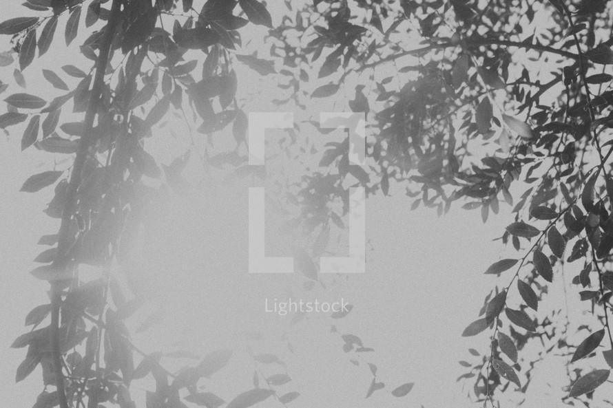 bright sunlight through branches