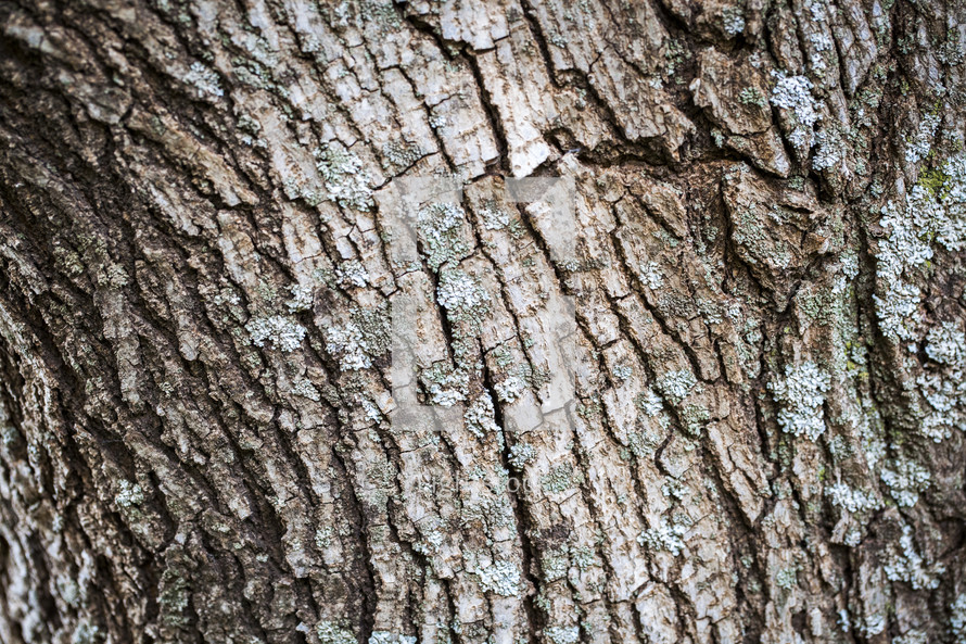 The bark of a tree.