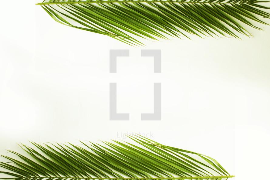 palm frond border