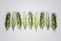 Palm branches for Palm Sunday on a white  background