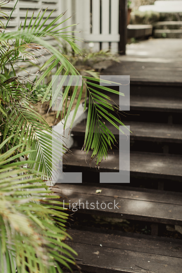 wood steps to a deck and palm fronds