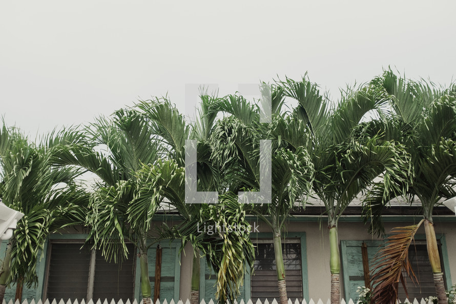 palm trees in front of a home in the Bahamas