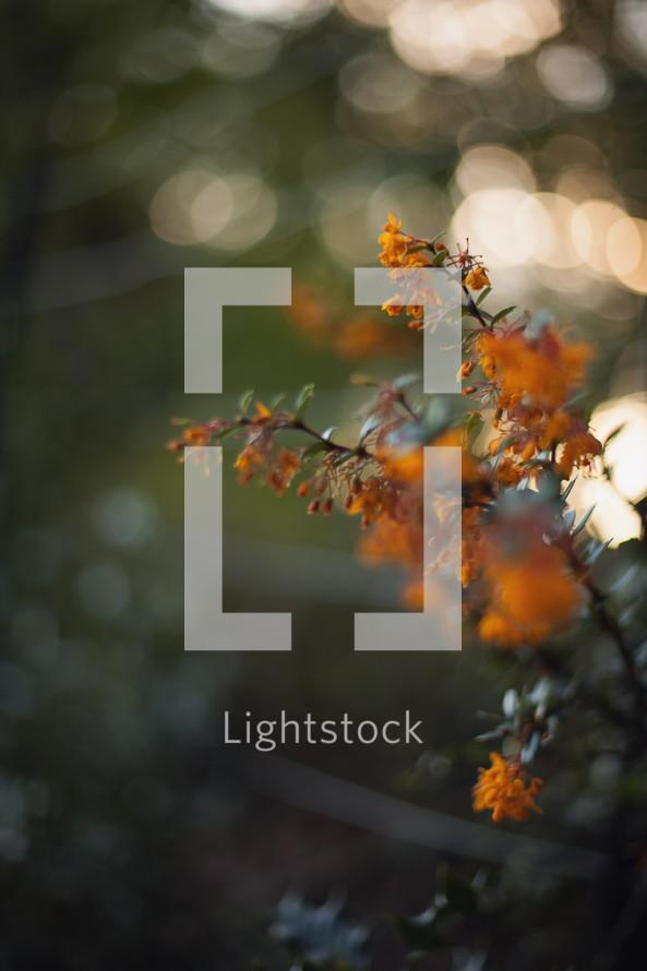 bokeh sunlight and orange spring flowers