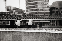 seagulls on a bridge