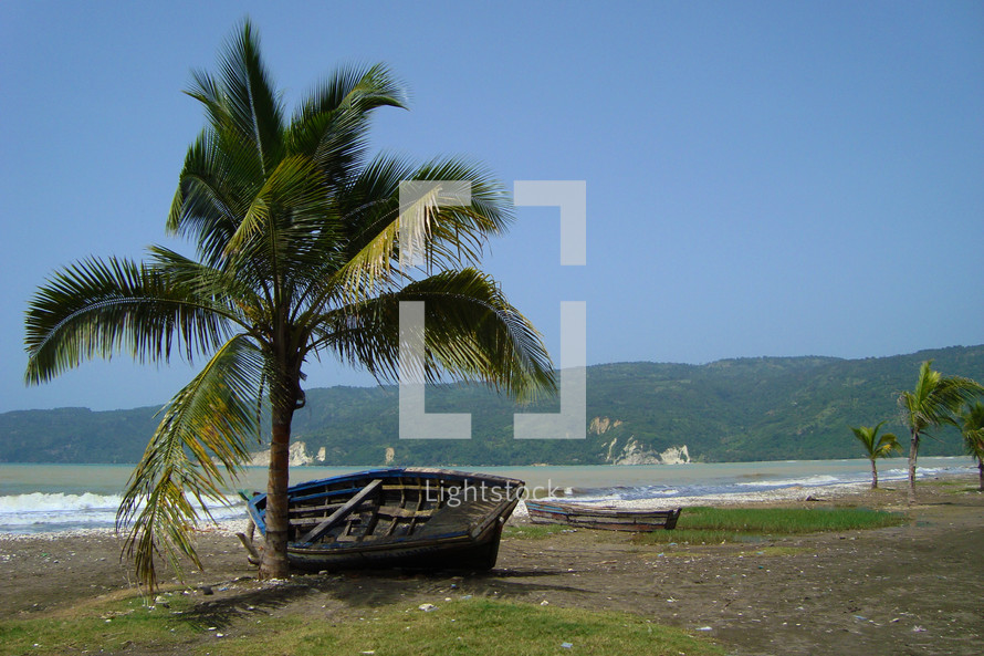 Old wooden boat on shore next to a palm tree.