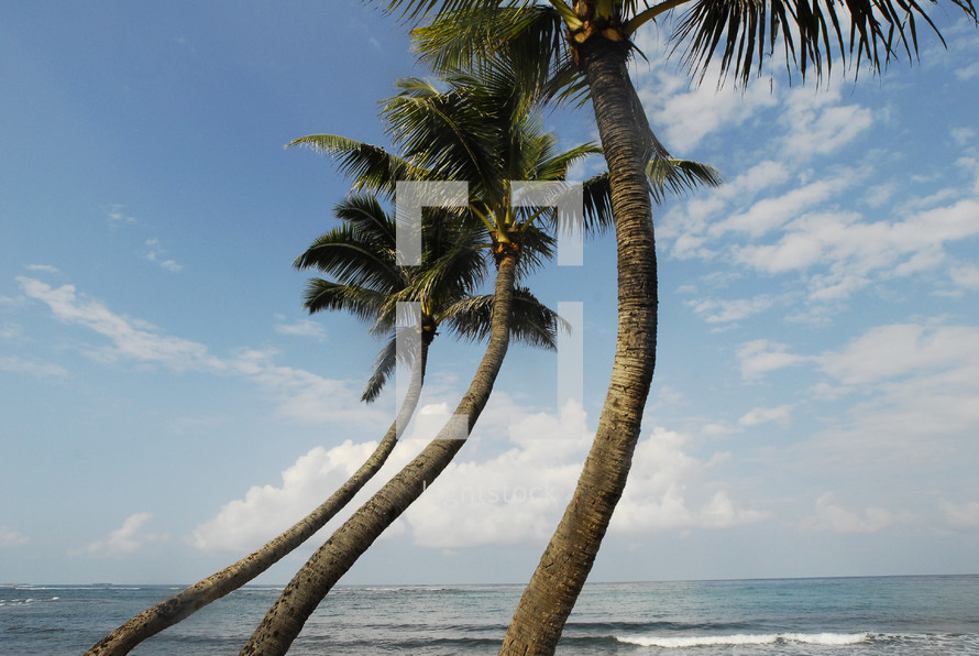Wind blown palm trees against blue sky and the ocean.