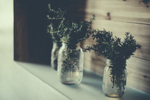 Rosemary in mason jars.