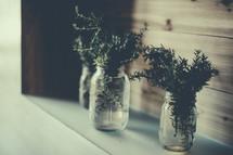 Rosemary in mason jars.
