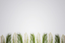 Palm branches for Palm Sunday on white