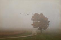 fog over a dirt road