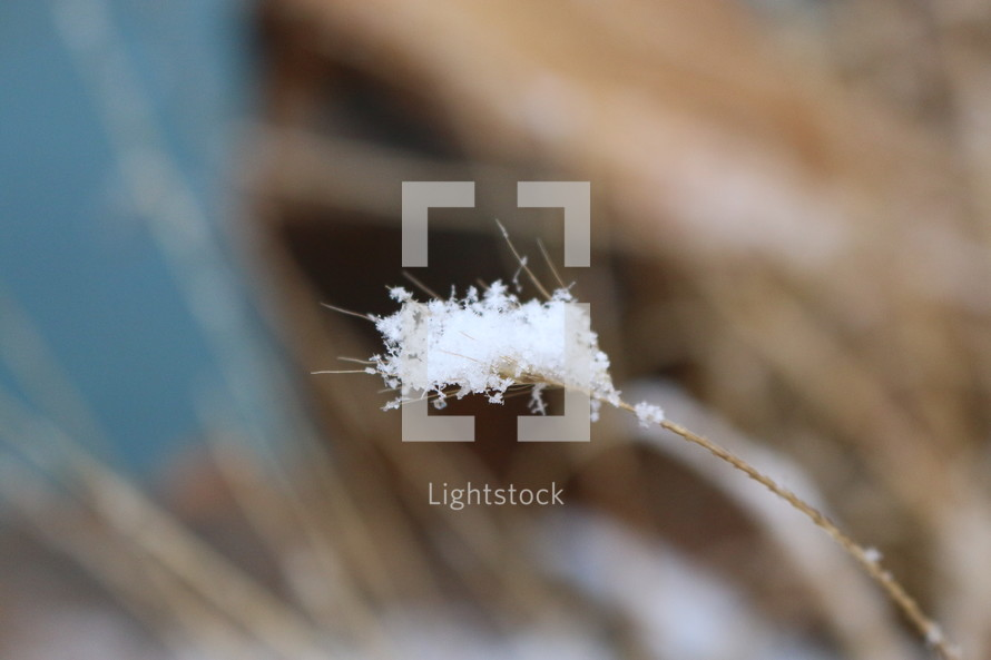 a fluff of snow on dry grass