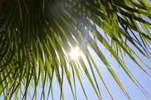 Sun shining through palm tree fronds