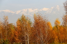 Fall foliage with snow clad mountains
