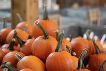 orange baking pumpkins