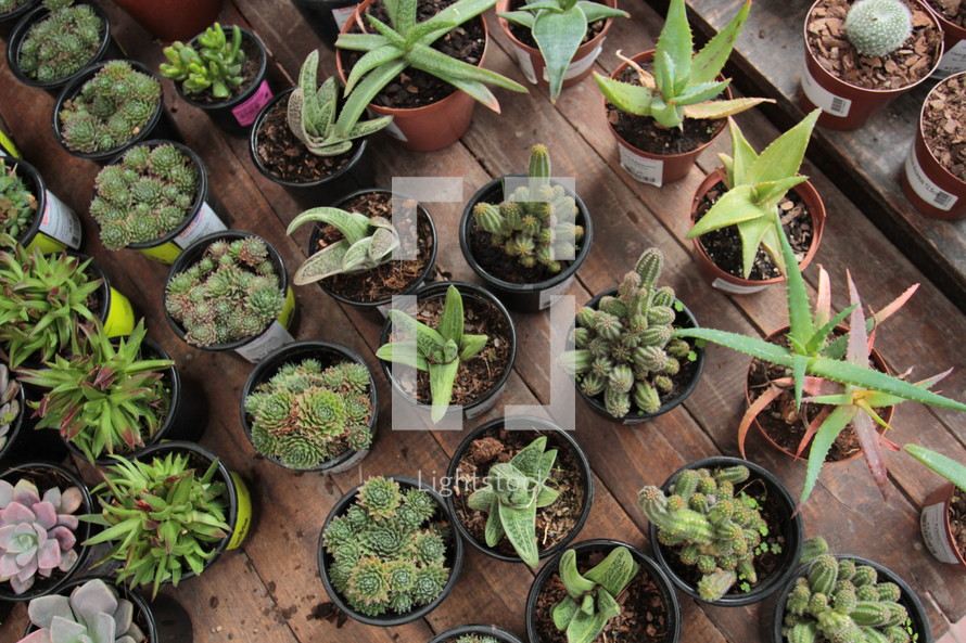 potted plants in rows