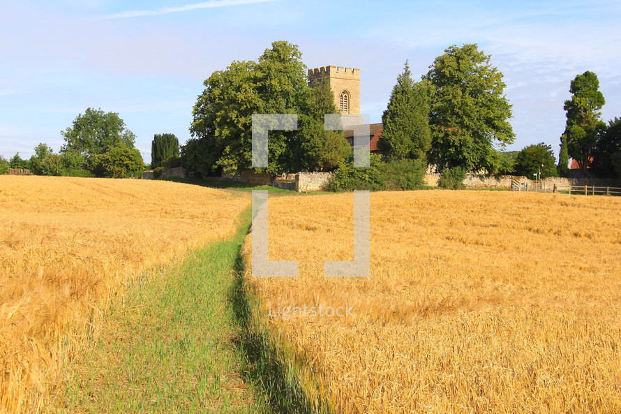 Pathway through field of ripe wheat leading to English countryside church