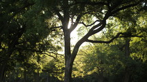 summer tree illuminated by sunlight