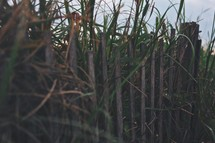tall grass and a fence