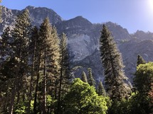 tall forest trees and rock cliff