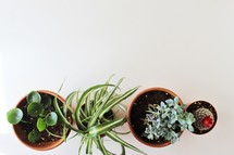 overhead view of house plants
