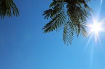 sunburst through branches