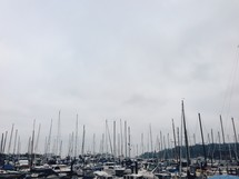 crowded boats in a marina