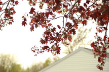 fall leaves on a tree and a house roof line
