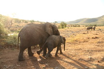 Mother and baby elephant walking across a savannah with rhinoceroses in the background.