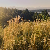 Tall grasses and sunlight