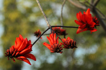 red flowers on tree branches