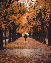 a woman with an umbrella walking under fall trees