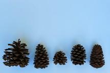 pine cones on white