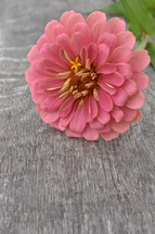 one pink flower