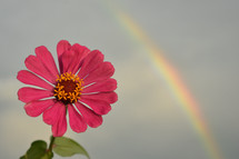 pink flower and rainbow