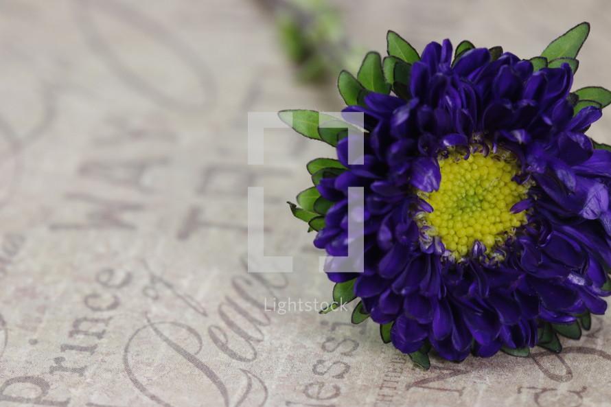 a purple flower, prince of Peace