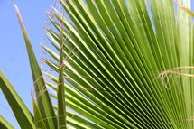 Palm fronds or branches