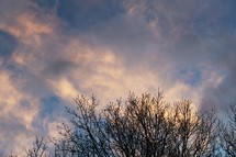 budding tree branches at sunset