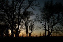Silhouette of trees at dusk.