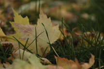 yellow leaves in grass