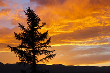 silhouette of a tree under an orange sky at sunset