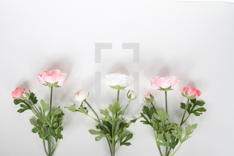 pink and white flowers