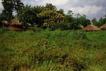 Huts in the jungle