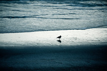 seagull on a beach standing in water